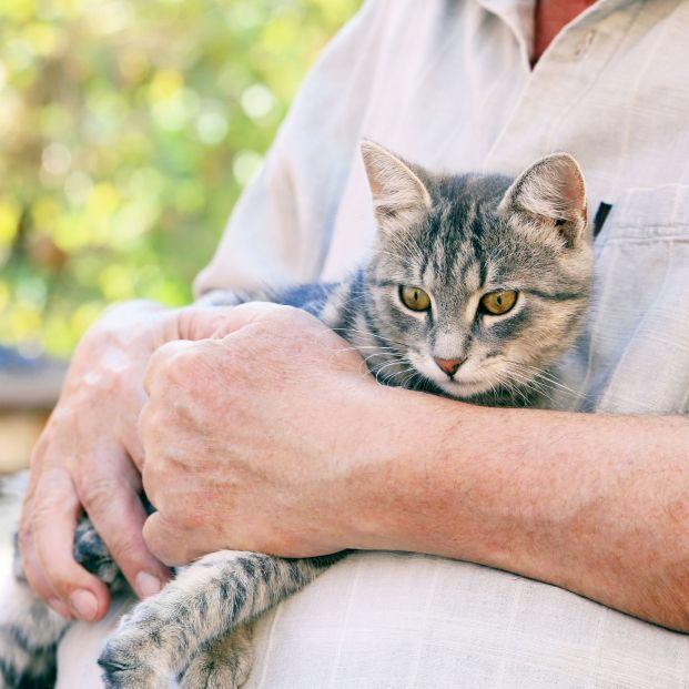 """""""Mayores y Mininos. Adopta un Gato"""" para combatir la soledad en las personas mayores. Foto: Bigstock"""