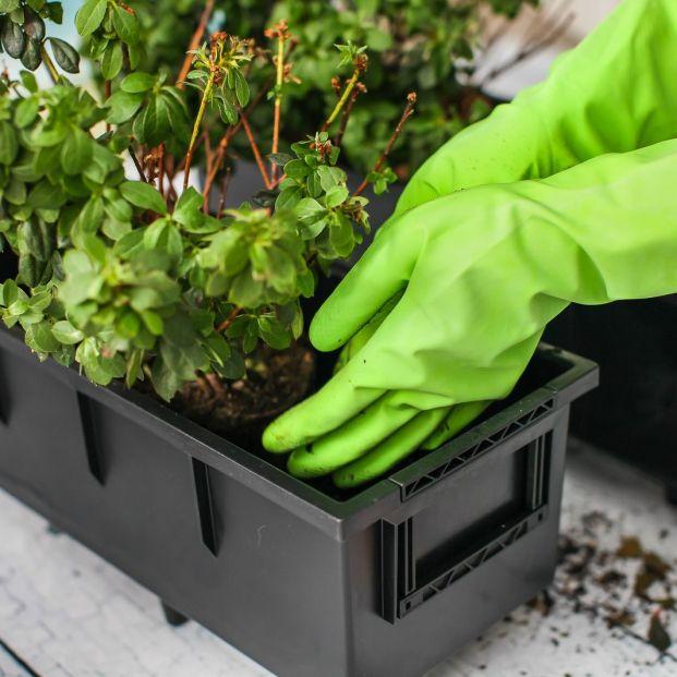 Cómo trasplantar una planta (Bigstock)