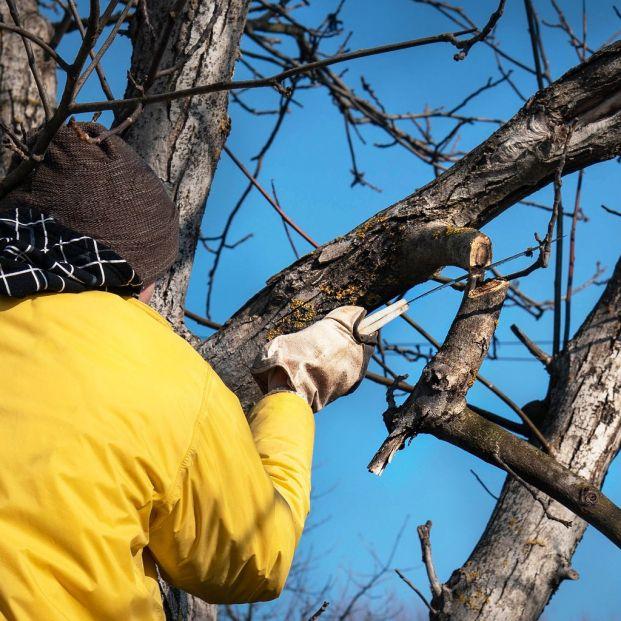 Permiso para talar un árbol