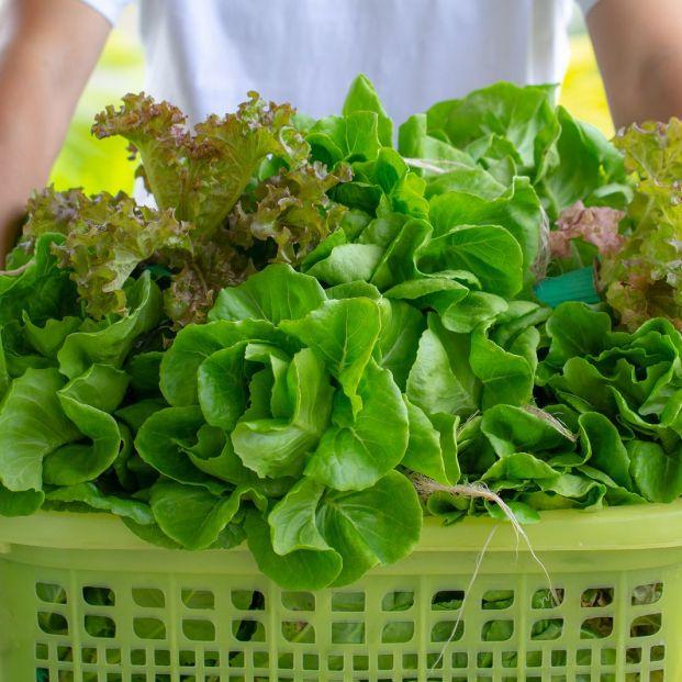 Verduras de hoja verde que debes incluir en tu dieta
