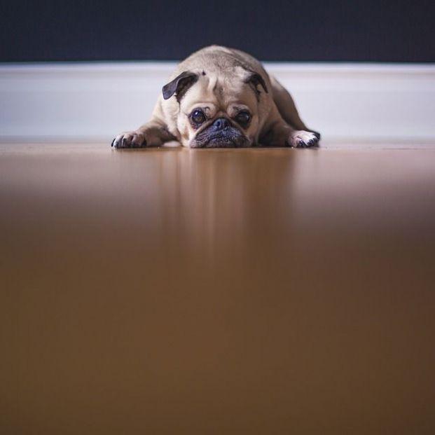 Las mascotas también se deprimen