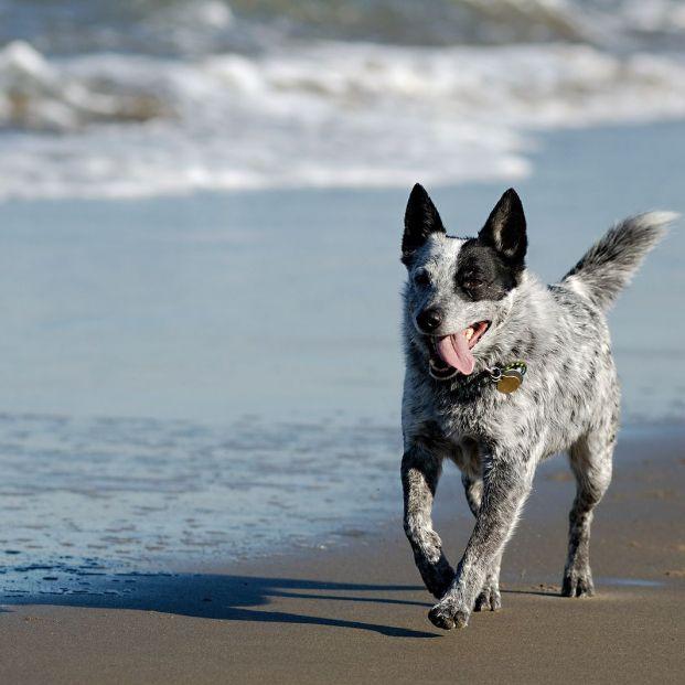 Mejores playas caninas de la costa levantina