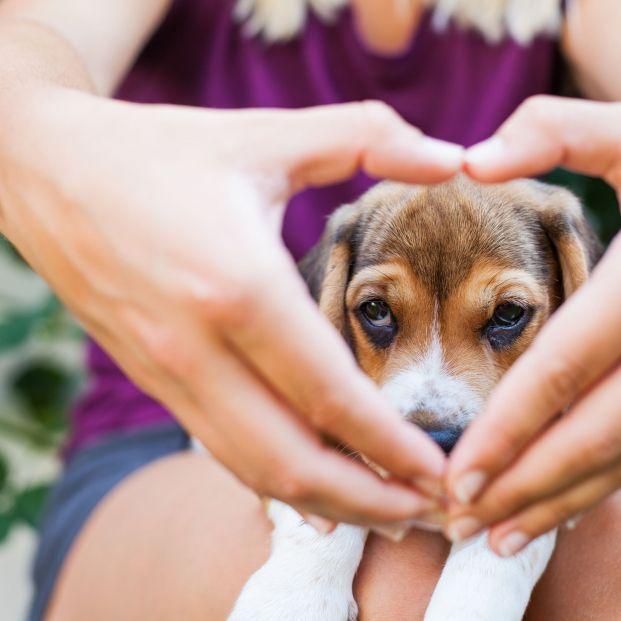 The Doger Café, el primer local donde se pueden adoptar perros