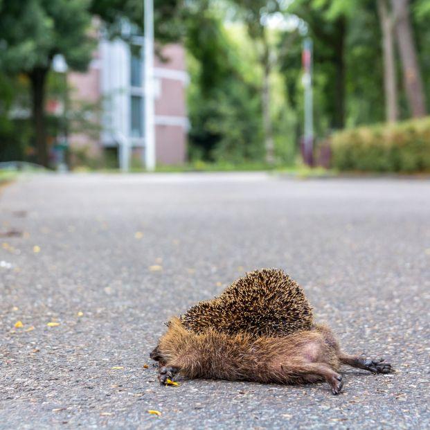 Qué hacer si encuentras un animal herido en la calle